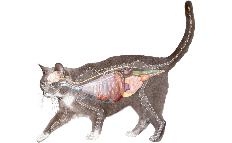 kat anatomie